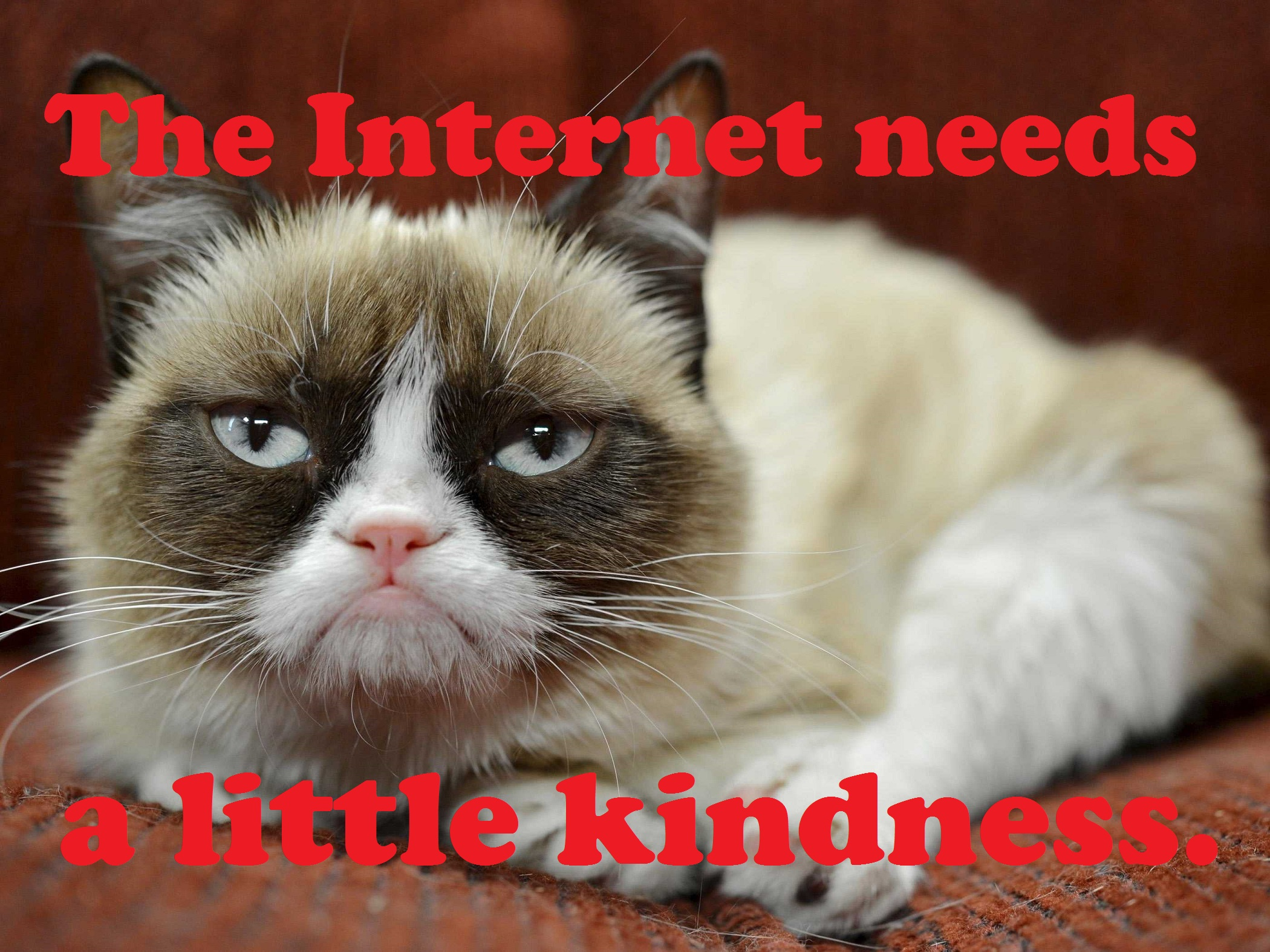 grumpy cat pictures with captions   viewing gallery
