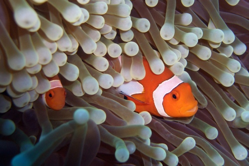 Creative collaboration is symbiotic, like clownfish and anemones. Wait, this is a terrible metaphor. Never mind.