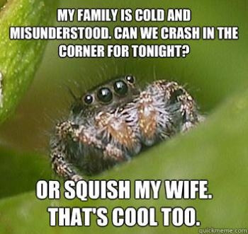 Misunderstood spider is misunderstood