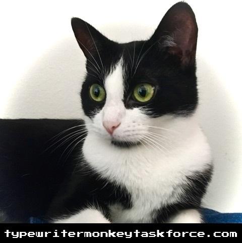 Pearl-cat